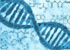 Що таке ДНК? Чому ДНК - це основа живих організмів?