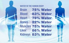 Вода складає близько 66 відсотків людського тіла.
