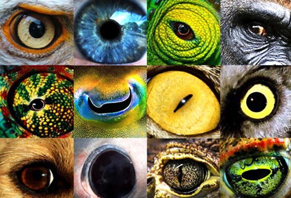 Як бачать тварини