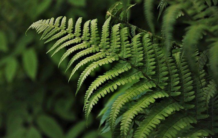 Цікаві факти про рослин