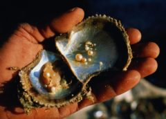 How the pearls are formed? Natural and artificial pearls
