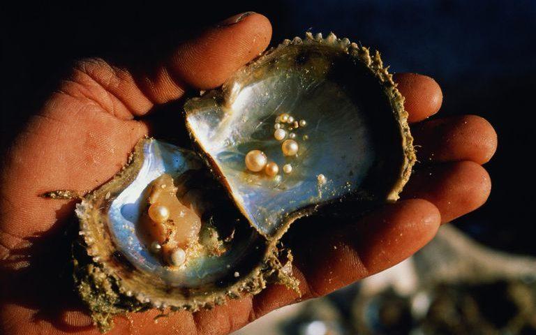 Як утворюються перлини: навіщо устрицям потрібно їх виготовляти?