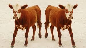 Яких тварин вже клонували?