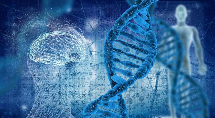 Які потенційні недоліки клонування організмів?