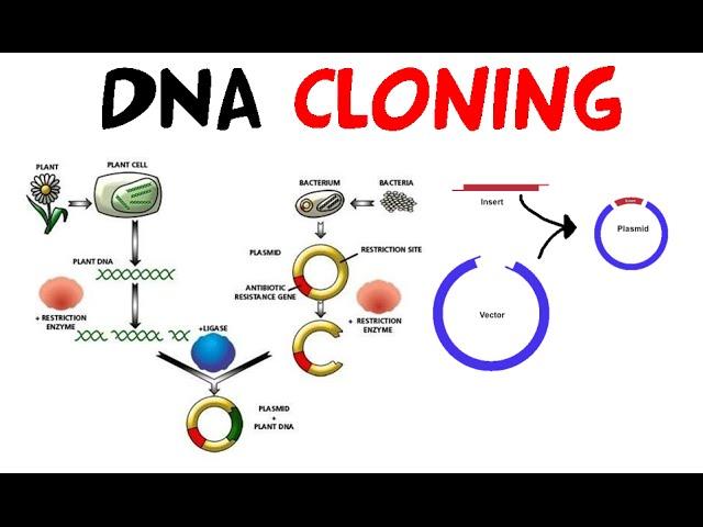 Як клонують гени?
